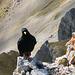 Ein frecher Genosse wartet auf Häppchen von der Gipfeltruppe