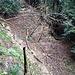 """Ins Rütschlibachtobel hinein ziehe ich den Trampelpfad auf der südlichen Krete des Tobels dem häufig sumpfigen Bachweg vor. Der Kretenpfad bietet mehr """"Trampelpfadfeeling"""", auch wenn er ein paar zusätzliche Höhenmeter bringt."""