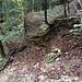 Zuhinterst im Tobel endet der Kretenweg an einem tiefen, ausgeschwemmten Runsenbett. Man steigt nicht in dieses hinunter, sondern geht etwas zurück und findet einen leichten Abstieg zum Bachweg (Bild).