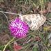 È ancora tempo di farfalle