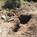 Von Wildschweinen umgepflügter Boden