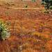 Schöne Farben im Hochmoor