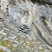 """Der Abstieg vom Plateau bei Punkt 2565 ins """"Il Vonn"""" ist mit diesem Steinmann markiert."""
