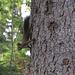 Eichhörnchen auf dem Eichhörnchenweg.