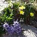 hübsche Blumenkombination