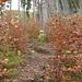 Durch einen bunten Buchenwald geht es steil bergauf