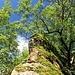 Fels und Baum