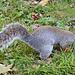 Squirrel, so ne Art schottisches Eichhörnchen. Können recht frech und aufdringlich werden, wenn Passanten an etwas netten Herumknabbern, was in ihrem Beuteschema gerade passt