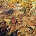 Steine im klaren Zufluss ...