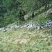 muro che separava i prati sfalciati (privati) dai pascoli del'alpe Vacarisc