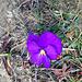 einsame Blüte - weit und breit die einzigste Blüte