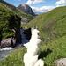 Ein Hund betrachtet nachdenklich die Landschaft.
