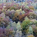 ......autunno 2.......