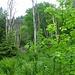 Wer hat eine Erklärung für dieses Phänomen? Genau in der Fallinie sind auf ca 200 Metern Länge viele Bäume abgestorben und ragen kahl in den Himmel. Weit und breit sind aber keine erkennbaren Ursachen wie Strom- oder Wasserleitungen.