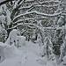 Der Schnee bildet zauberhafte Baumlandschaften