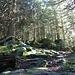 .....un po di sole filtra tra gli alberi