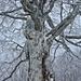 Ein Baum wie aus einer anderen Welt
