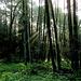 Der Nebel wabert noch im Wald