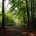 Durch den lichten Sebalder Wald