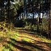 Die Sonne tut gut im Wald