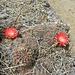 Da ist der kleine Kaktus-Fotostopp eine willkommener Anlass fuer eine kurze Pause.