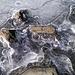 Trappola di ghiaccio