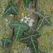 Efeu auf Baumstamm