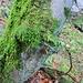 Neustes Produkt aus dem Hause Natur. Baum mit integriertem Zaun.