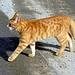 Eine junge Katze kreuzt meinen Weg