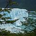 Herrliche Kontraste, Südbuchenzweige und jede Menge Eis