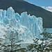 Manchmal rückt der Gletscher so weit vor, dass auch mal ein Baum zermalmt wird