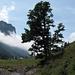 Le Niederhorn depuis Grosse Mittelberg dans le Justistal