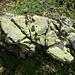 beeindruckende Gesteins-Flechten-Formation