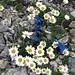 Blumenarrangement am Wegesrand