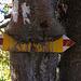 Gefrässiger Baum
