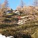 La discesa diretta verso l'Alpe Màter si svolge principalmente su ginepri e rododendri