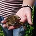 Der Frosch von Tannalp (heute nicht mit Maske, die ihm von Edgar Wallace verpasst wurde...).