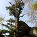 Zwischen den Felsen ragen einsame Baumriesen auf.