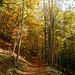Auf schönem Weg geht's von der Oberbergsiedlung durch den herbstlichen Wald nach Hilkat.