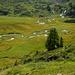 Le Pichioc - Sumpfgebiet