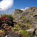 Gipfel vom Becca de Lovégno