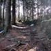 lichtdurchflutete Waldwege