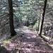 Schöner Waldabstieg nach Eugst. Mit unzähligen, teils erst erneuerten, Holzstufen versehen.