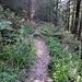 und wieder in den Wald, Abstieg zum Lac Noir