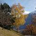 Baumgruppe  bei Taschunieru