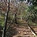 Im lichten Wald aufwärts (das Bild zeigt die Steilheit des Geländes nicht).