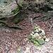 Dieser Steinmann markiert die Stelle, wo Bachpfad und Kretenpfad aufeinandertreffen. Steht man hier und will die Direttissima Süd begehen, folgt man dem Kretenpfad zuerst ein paar wenige Schritte aufwärts und dann (in Gehrichtung) links, bis man vor dem mächtigen Buckel steht, der das untere Ende der gesuchten Rippe ausmacht.