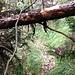Ein weiteres Sandsteinwändchen (hinten im Bild knapp sichtbar) verhindert den Aufstieg in der Vertikalen. Der Pfad führt links, in südlicher Richtung, daran vorbei.