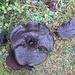 ungewöhnliche Pilze