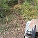 Die im Bericht beschriebene Kreuzung von Ankenweidpfad und Felsenkammerpfad (gut erkennbar an den grossen, mit Blechen gedeckten Holzbeigen). Der schmale, auf dem Foto gut sichtbare Pfad, der zum oberern Bildrand führt: Das ist der Pfad zum Bristenstäfeli (die Hütte ist auf der Karte eingezeichnet). Wir folgen ihm aber nur für ein ein paar Meter (gut 20 Schritte) und verlassen ihn Richtung links zwischen zwei markanten Eiben hindurch. Zuerst geht es ziemlich pfadlos und etwas mühsam weiter, und zwar schräg nach links hinauf, bis die Krete ausgeprägt wird und wir dieser auf Pfadspuren gut folgen können, bis wir wieder auf den etwas ausgeprägteren Pfad treffen, der die Höhe via Bristenstäfeli gewinnt.
